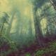 los abonos verdes