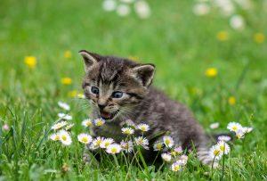 biodegradable-cat-litter