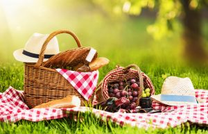 picnic-zd