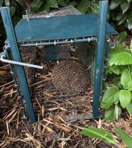 roedor-nokill-trap