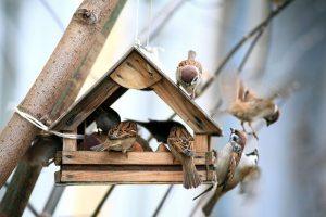 alimentador de especies de pájaros