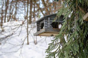 alimentador de casas para pájaros