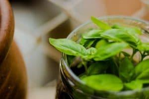 planta-puede-vidrio
