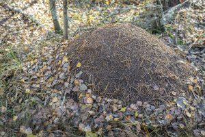 hormigas-nidos
