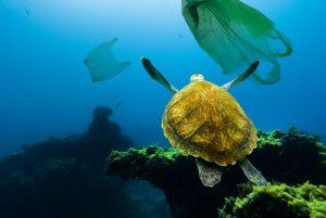 bolsa de medusas