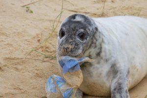 intoxicación por plástico