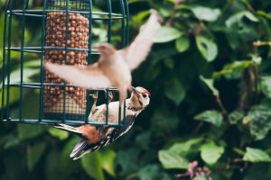 alimentadores de aves