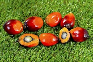 aceite de palma sostenible