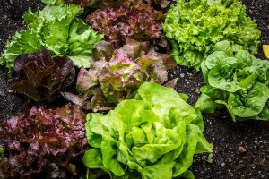 ensaladas ecológicas